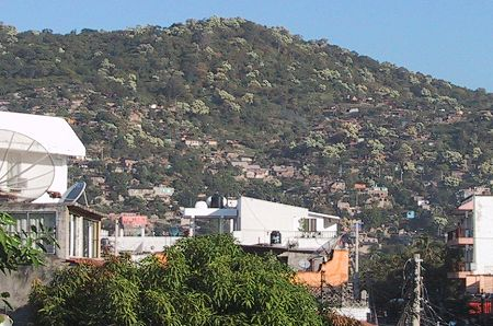 Zihuatanejo hillside covered with blooming bocote trees in October